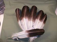 Turkey Feathers EAGLE SUB-6-FEATHERS , BROWN TIP , CRAFTS , EAGLE MIMIC