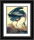 Framed Art - Great Blue Heron - Audubon, John James - w/Frame Size & Styles