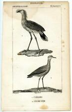 1816 Turpin Crested Cariama Plover Copper Engraving Antique Zoology Print