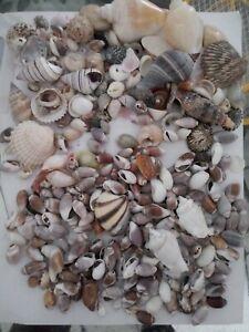1 Lbs. Mixed Seashells Sea Shells Decorator Wedding Lot freeship tiny small