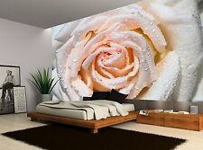 Floral One Pink Rose Wet Flower Wall Mural Photo Wallpaper GIANT WALL DECOR