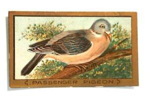 Passenger Pigeon Vintage Piedmont Cigarette Bird Series Tobacco Card