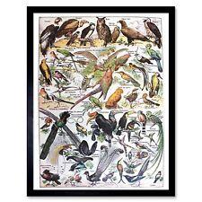 Scientific Birds Identification Owl Vulture Toucan 12X16 Inch Framed Art Print