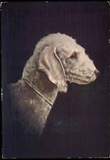 BEDLINGTON TERRIER dog ~ De Reszke Cigarette advertising postcard ~ embossed