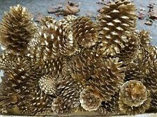 15 Gold Painted Natural Pinecones
