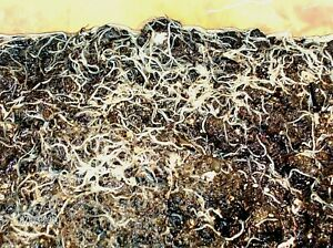 White Worms 1000 + Live Worms + FREE Food + FREE Plants + FREE Ship