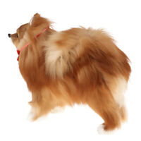 Cute Pomeranian Model Vivid Realistic Toy Craft Prop Gift for Kids Adults