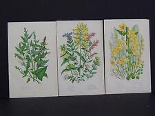 Anne Pratt Botanical, c.1899, Original Color, 3 Prints! English #31