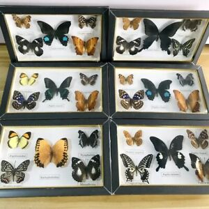 Natural Real Butterfly Insects Specimen Collection Specimen Artwork gift Frame