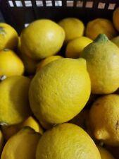 Limoni di sicilia BIO NON TRATTATI Prod. Propria 10kg circa