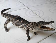 Crocodiles 50cm - crafts - it's stuffed crocodile - Handmade 50 cm long (UQ50)