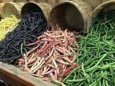 ☺4x20 graines de haricot. 4 variétés