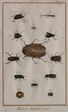 INSETTI ENTOMOLOGIA INSECTS INSECTES INCISIONE 1700 COL