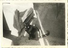 PHOTO ANCIENNE - VINTAGE SNAPSHOT - ANIMAL CHAT NOIR LUMIÈRE  - BLACK CAT LIGHT