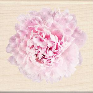 FLOWER CARNATION Photo Real Wood Mounted Rubber Stamp INKADINKADO 60-00619 New