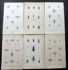 Baron Cuvier 1834 Lot of 6 Hand Col Insect Prints. Book Plates