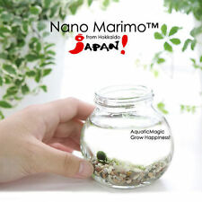 Nano Marimo Moss Ball: Acrylic glass tropical fish Bowl, Live Plant for Aquarium