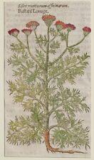 JOHN GERARD BOTANICA MATTHIOLI 1597 SILER MONTANUM OFFICINARUM ORIGINALE