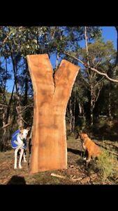 Blackwood Raw Timber Slab Natural Edge