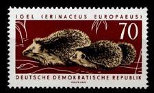Igel. Braunbrustigel. 1W. DDR 1963