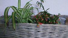 Blumenkasten Rattan Pflanzschale*Landhaus *Neu Shabby Chic Landhausstil 45x20cm
