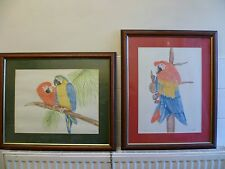 More details for two vintage, framed drawings of macaws, by d morgan.  tropical bird sketches