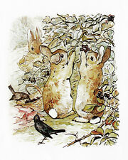 Three Bunnies Gather Blackberries by Beatrix Potter Paper Print Repro