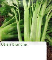 Légumes CELERI  en Branche  Graines semences Seeds Célery produit en France 200
