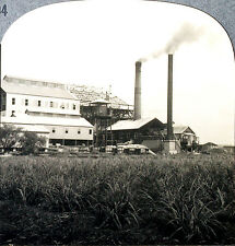 Keystone Stereoview of an American Sugar Mill in HAWAII from the 1930's T600 Set