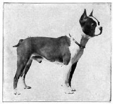 Boston Terrier Book 1910 dog