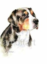 Greater Swiss Mountain Dog Aceo Card Print by A Borcuk