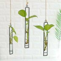 Wall Hanging Flower Pots Transparent Hydroponics Flower Bottle Home Decor New