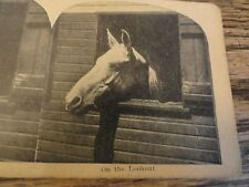 """Old Stereoview - """"On The Lookout"""" - Horse With Head Out The Window"""