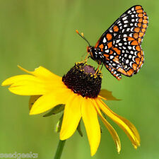 Butterfly Garden Flower Mix Heirloom Seeds -Non-GMO -Untreated-Open Pollinated!