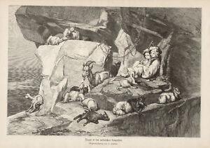 Child Shepherd With Goats Mountain German Antique Print