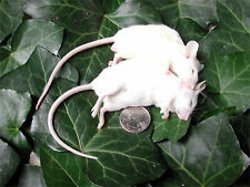 Frozen Feeder Mice: 200 Large Adults -Free S&H -MiceDirect ! Rodents! Reptiles