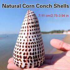 Natural Corn Conch Shells Black Seashells Home Ornament Fish Tank Decoration