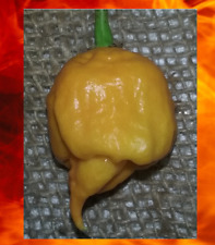 10 seeds YELLOW CAROLINA REAPER Hottest Pepper on Earth Guinness World Record!