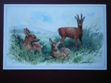 POSTCARD ANIMALS ROE DEER