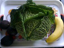 2g (approx. 700) savoy cabbage seeds VERTUS 2 the best flavoured cabbage Tender