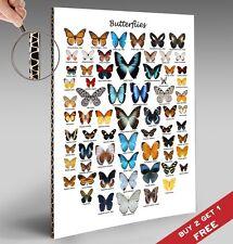 British farfalle grafico POSTER 30x21cm GRANDE REGALO EDUCATIVO Casa Decorazioni da parete