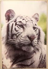 (PRL) 1986 SIBERIAN TIGER AMUR TIGRE SIBERIANA VINTAGE PRINT AFFICHE ART POSTER