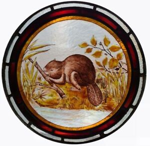 Beautiful Huge Very Rare Victorian Painted Beaver Stained Glass Roundel