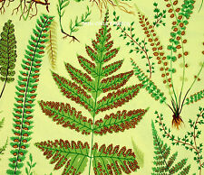 1YD Snow Leopard BOTANICAL FERNS PWSLOO3 YELLOW Plant Fronds Philip Jacobs