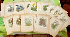 58 Affiche Planche Botanique Fleur de nos Montagnes 1946 Gentiane,Lin des Alpes
