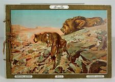 c1890 KINNEY BROTHERS TOBACCO CARD ALBUM NATURAL HISTORY ANIMALS N216 SERIES A57