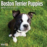 2021 Boston Terrier Puppies 12 x 12 Wall Calendar Cute Dog