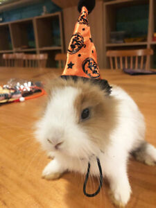 Ferret Rabbit Guinea pig Halloween Hat Christmas Costume Xmas Clothes Outfit