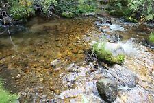 Big Union Creek Colorado Gold Mine Placer Mining Claim Panning Sluice Highbank