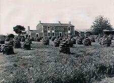 VENDEE c. 1950 - Séchage des Bouses de Vaches Combustible - Div 2782